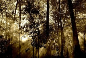 Photo of starkly lit jungle.